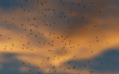 Materiales para fabricar mosquiteras correderas